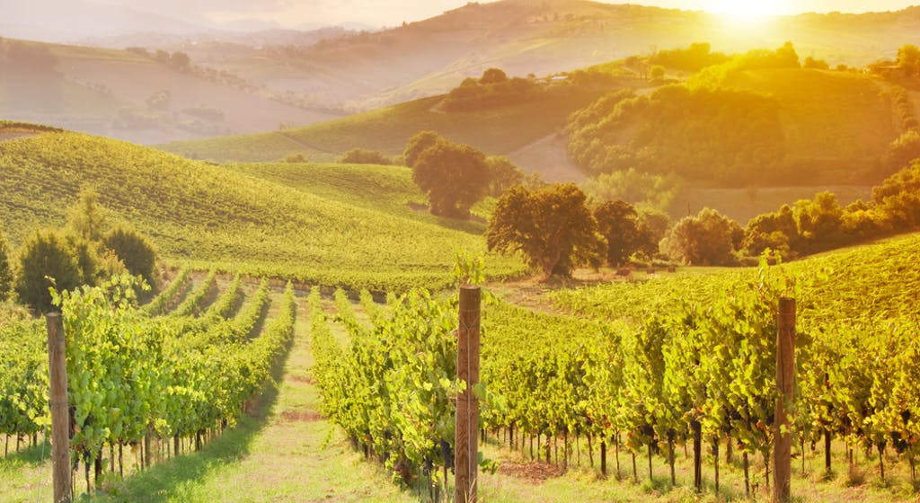 Overseas investor's application to buy vineyards declined